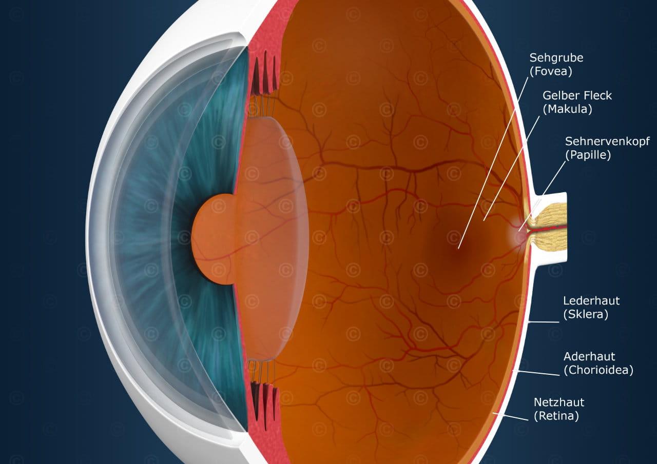 Erklärende Illu -Auge