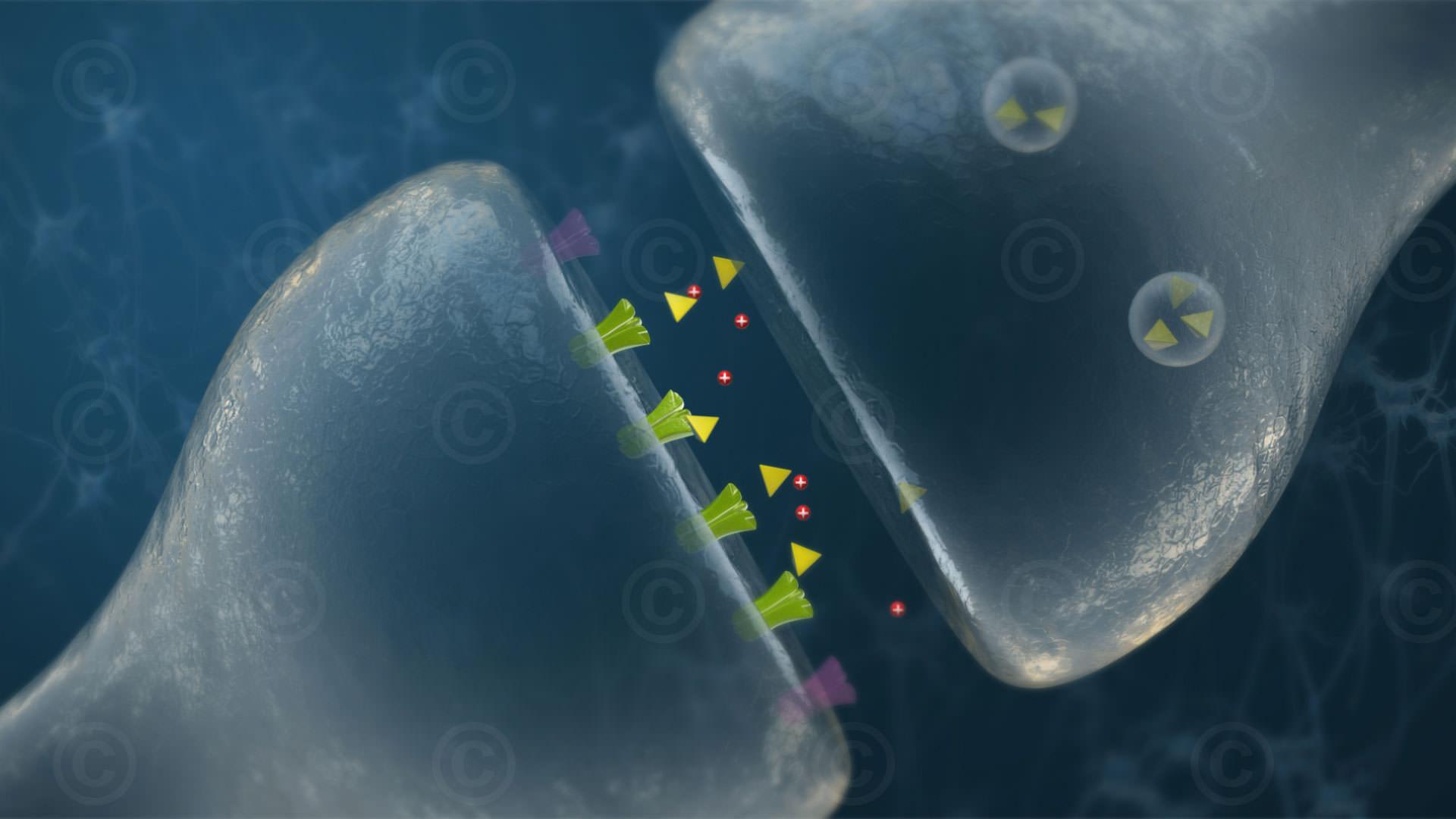 Transmitter am Synapsenspalt
