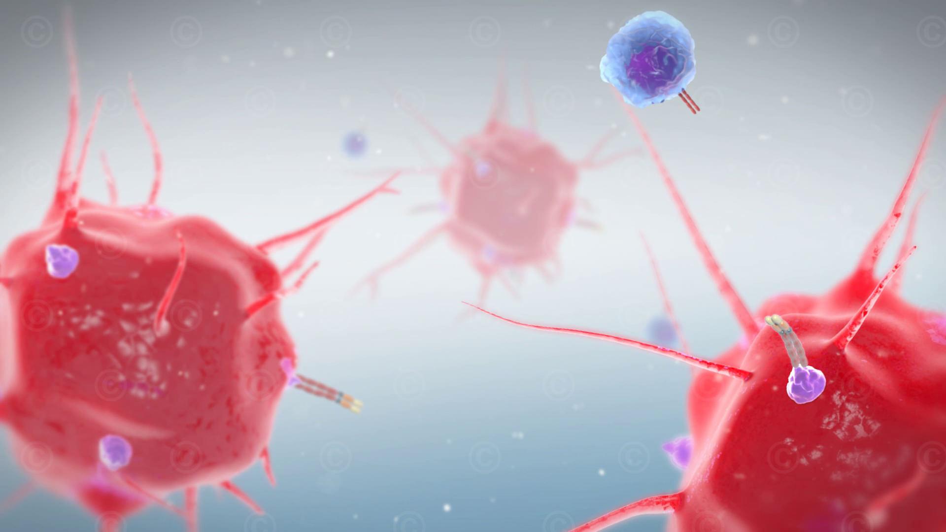 animation krebs immuntherapie gross