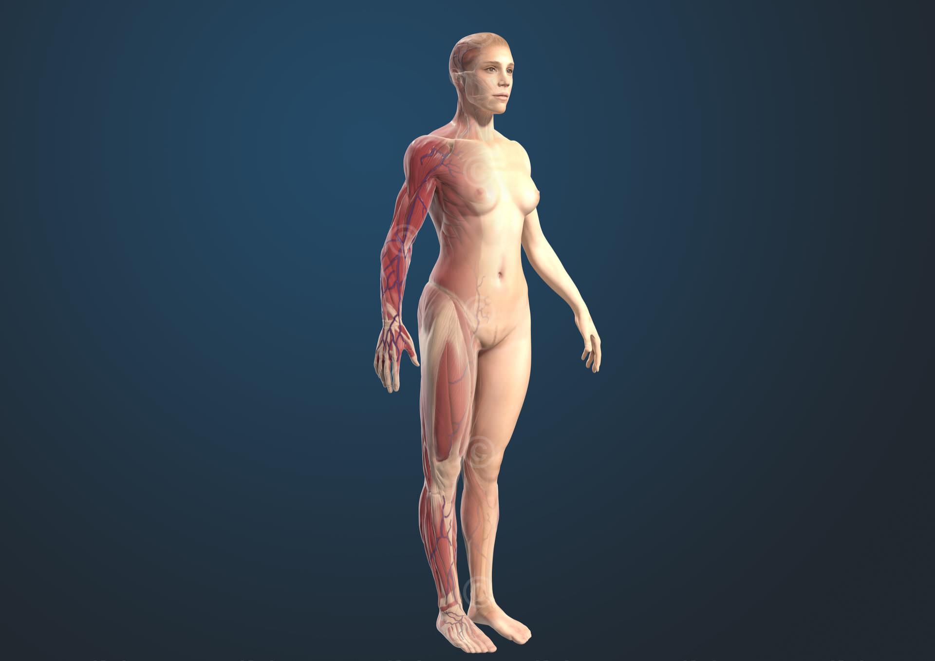 weibliche figur muskeln gross